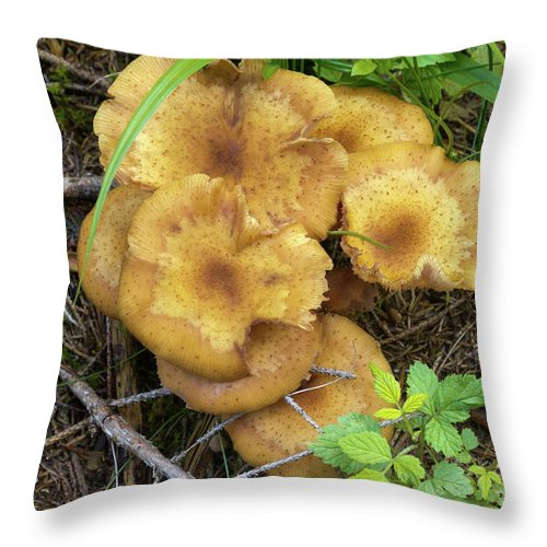 Wild Throw Pillow featuring the photograph Wild Mushrooms 1 by Bernard Barcos
