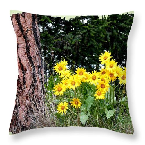 Wild Oyama Sunflowers Throw Pillow featuring the photograph Wild Oyama Sunflowers by Will Borden