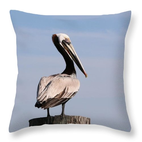 Wild Throw Pillow featuring the photograph Wild Pelican by Christy Pooschke