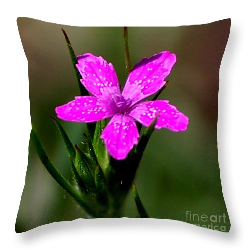 Digital Photo Throw Pillow featuring the photograph Wild Pink by David Lane