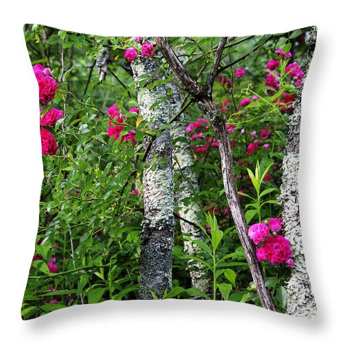 Wild Rose Throw Pillow featuring the photograph Wild Rose In Sumac by Thomas R Fletcher