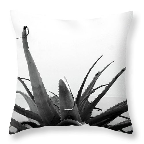 Succulent Throw Pillow featuring the mixed media Wild Succulent- By Linda Woods by Linda Woods