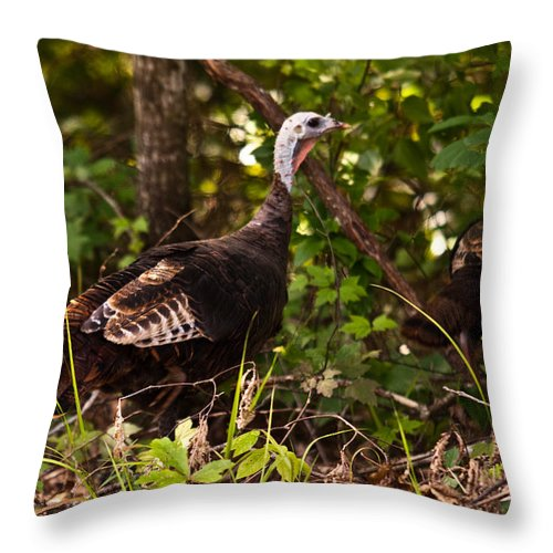 Turkey Throw Pillow featuring the photograph Wild Turkey In Tennessee by Douglas Barnett