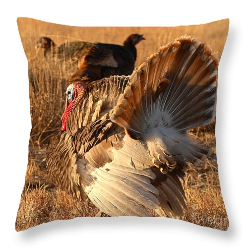 Turkey Throw Pillow featuring the photograph Wild Turkey Tom Following Hens by Max Allen