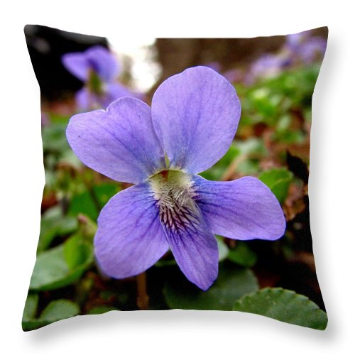 Violet Throw Pillow featuring the photograph Wild Violet 1 by J M Farris Photography