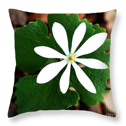 Digital Photo Throw Pillow featuring the photograph Wild White by David Lane