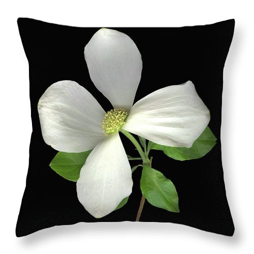 Dogwood Flower Throw Pillow featuring the photograph Wild Woods by Sandi F Hutchins