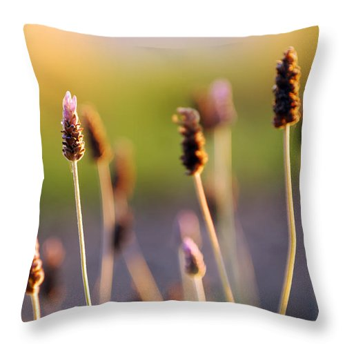 Nature Throw Pillow featuring the photograph Wildflower 2 by Jill Reger