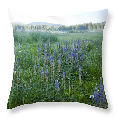 Wildflowers Throw Pillow featuring the photograph Wildflower Meadow by Idaho Scenic Images Linda Lantzy