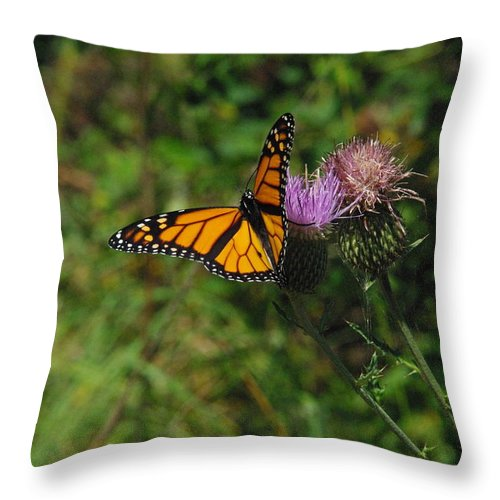 Thistle Throw Pillow featuring the photograph Wildflower Monarch by Robyn Stacey