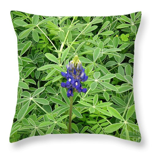 Nature Throw Pillow featuring the photograph Wildflowers - All Alone And Blue by Lucyna A M Green