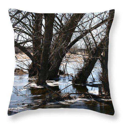 Willow Trees Throw Pillow featuring the photograph Willow Brook by Rick De Wolfe