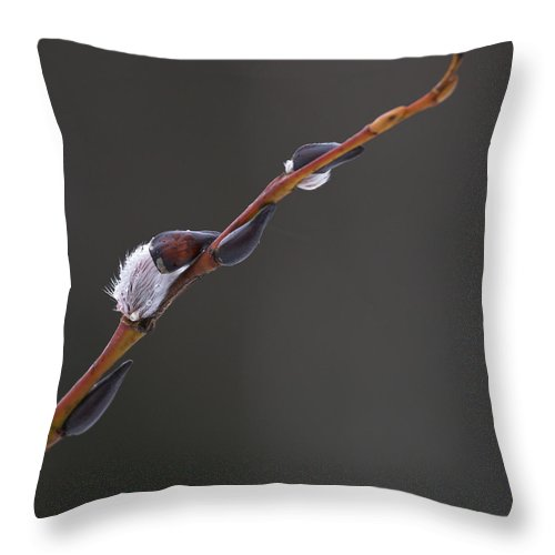 Lehtokukka Throw Pillow featuring the photograph Willow Catkins 3 by Jouko Lehto