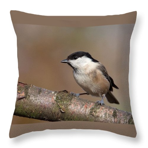 Willow Tit Throw Pillow featuring the photograph Willow Tit by Bob Kemp