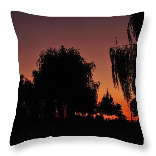 Leaves Throw Pillow featuring the photograph Willow Tree Silhouettes by Joe Ng