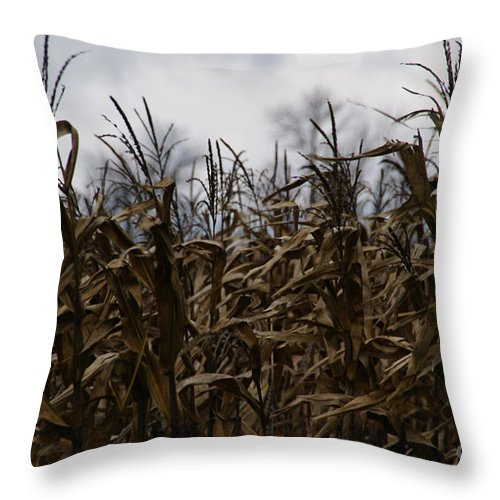 Corn Throw Pillow featuring the photograph Wind Blown by Linda Shafer