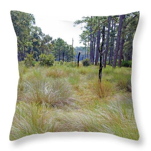 Grass Throw Pillow featuring the photograph Windblown Grass by Kenneth Albin