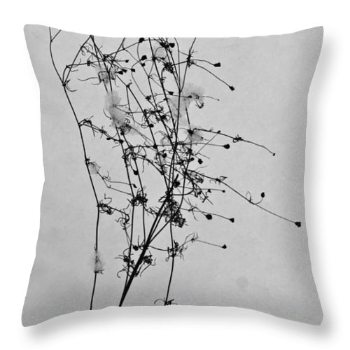 Windblown Throw Pillow featuring the photograph Windblown In The Snow by Douglas Barnett
