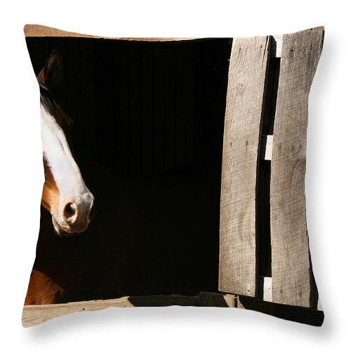 Horse Throw Pillow featuring the photograph Window by Angela Rath