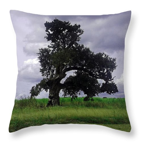 Louisiana Throw Pillow featuring the photograph Windswept Tree by Leigh Ann Raab