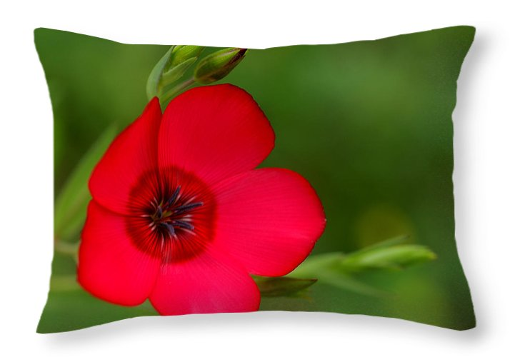 Annual Flox Throw Pillow featuring the photograph Red Annual Flox by Bill Morgenstern