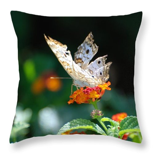Butterfly Throw Pillow featuring the photograph Winged Butter by Rob Hans