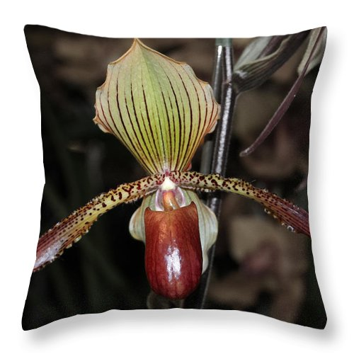 Orchid Throw Pillow featuring the photograph Winged Orchid by Mary Haber