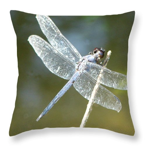 Dragonfly Wings Throw Pillow featuring the photograph Wings by Luciana Seymour