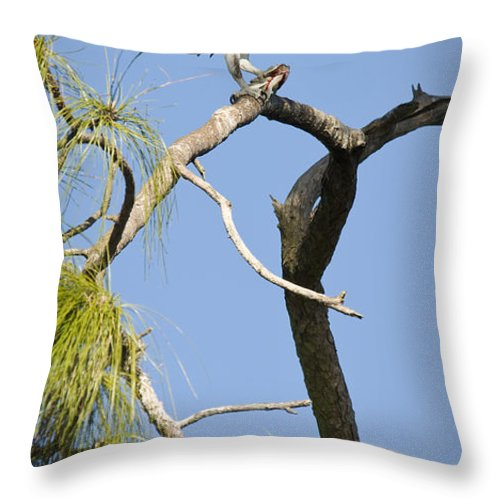 Osprey Throw Pillow featuring the photograph Wings Of The Raptor by Chad Davis