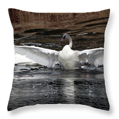 Wingspan Of A Trumpeter Swan Throw Pillow For Sale By Sharon Talson