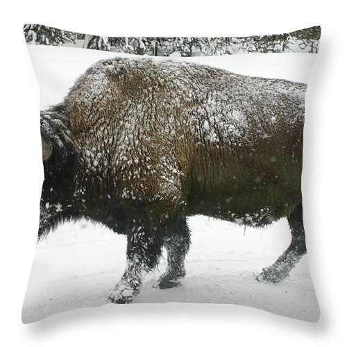 Buffalo Throw Pillow featuring the photograph Winter Buffalo by Patricia Montgomery