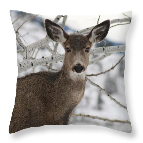 White Tail Deer Throw Pillow featuring the photograph Winter Doe Of The Okanagan by Tiffany Vest