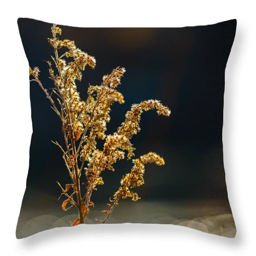 Warm Throw Pillow featuring the photograph Winter Glow #3 by Mark Robert Rogers
