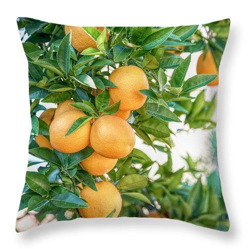 Throw Pillow featuring the photograph Winter In Arizona by Elisabeth Lucas