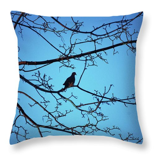 Mourning Dove Throw Pillow featuring the photograph Winter Mourning by Faith Harron Boudreau