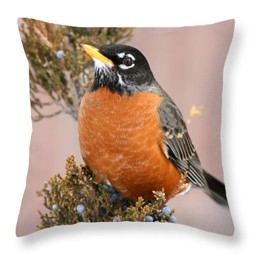 Bird Throw Pillow featuring the photograph Winter Robin by David Dunham