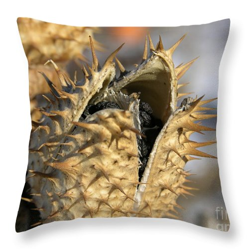 Winter Nature Throw Pillow featuring the photograph Winter Seed Pod by Carol Groenen
