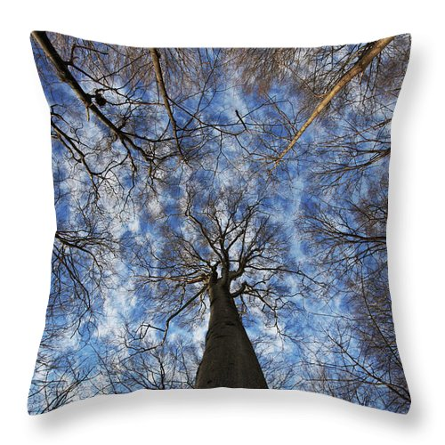 Botany Throw Pillow featuring the photograph Winter Sky by Mircea Costina Photography
