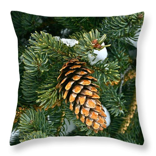 Tree Throw Pillow featuring the photograph Winter Spruce by Rick Monyahan