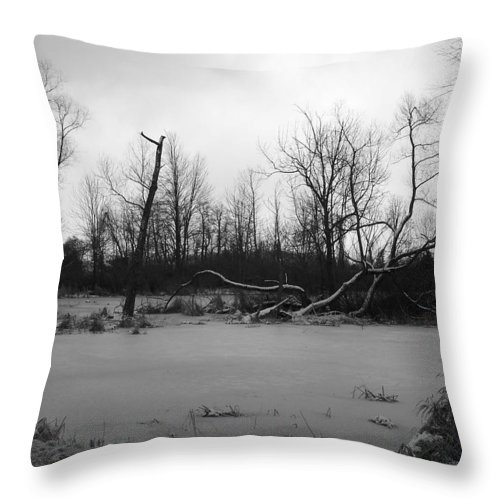 Swamp Throw Pillow featuring the photograph Winter Swamp by Michelle Miron-Rebbe