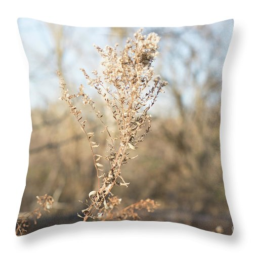 Winter Throw Pillow featuring the photograph Winter Weeds by Howard Roberts