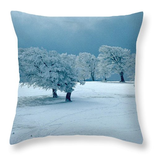Winter Throw Pillow featuring the photograph Winter Wonderland by Flavia Westerwelle