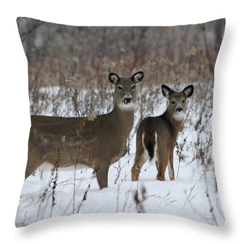 Deer Throw Pillow featuring the photograph Winter Wonderland by Lori Tordsen