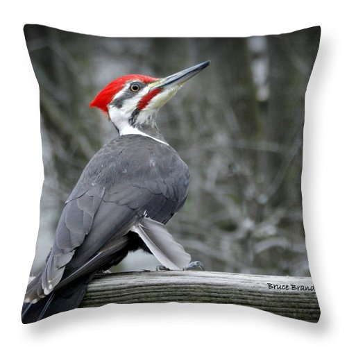 Pileated Woodpecker Throw Pillow featuring the photograph Winter Woodpecker by Bruce Brandli