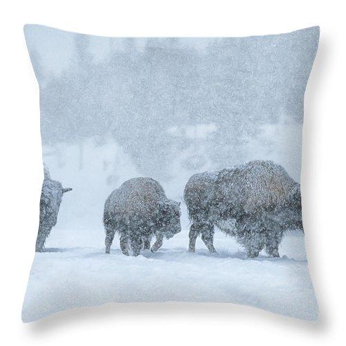 Bison Throw Pillow featuring the photograph Winter's Burden by Sandra Bronstein