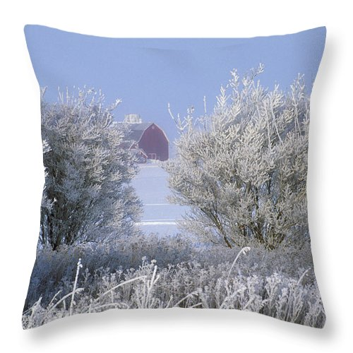Hoarfrost Throw Pillow featuring the photograph Winter's Embrace by Bruce Thompson