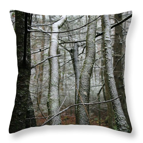 Tree Woods Forest Wood Snow White Green Winter Season Nature Cold Throw Pillow featuring the photograph Wintery Day by Andrei Shliakhau