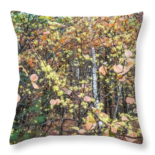 Witch Hazel Throw Pillow featuring the photograph Witch Hazel Forest by Diane Moore