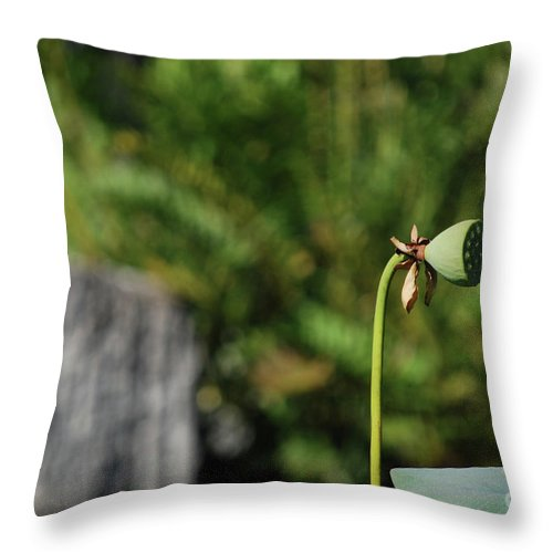 Throw Pillow featuring the photograph Without Protection Number Three by Heather Kirk
