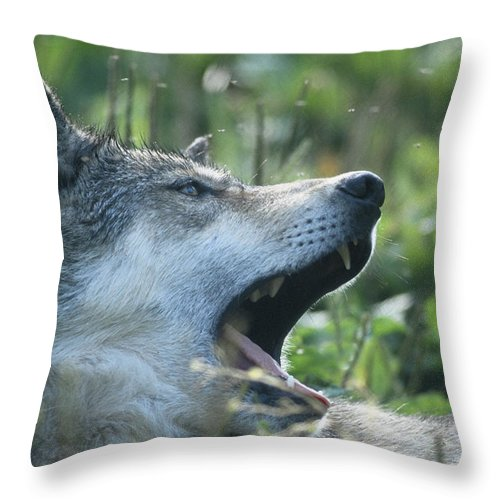Wildlife Throw Pillow featuring the photograph Wolf Bugged by Steve Somerville